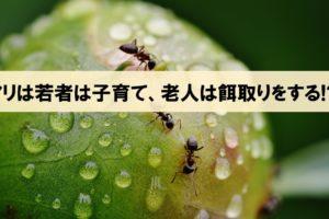 【アリは若者は子育てし、老人は餌取りをする!?】『働かないアリに意義がある』より_アイキャッチ画像