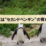 日本はリーダーより、セカンドペンギンの育成を!『世界観をつくる』より_アイキャッチ画像